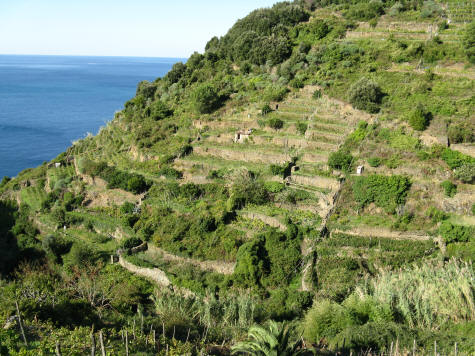 Trail from Vernazza to Corniglia Italy